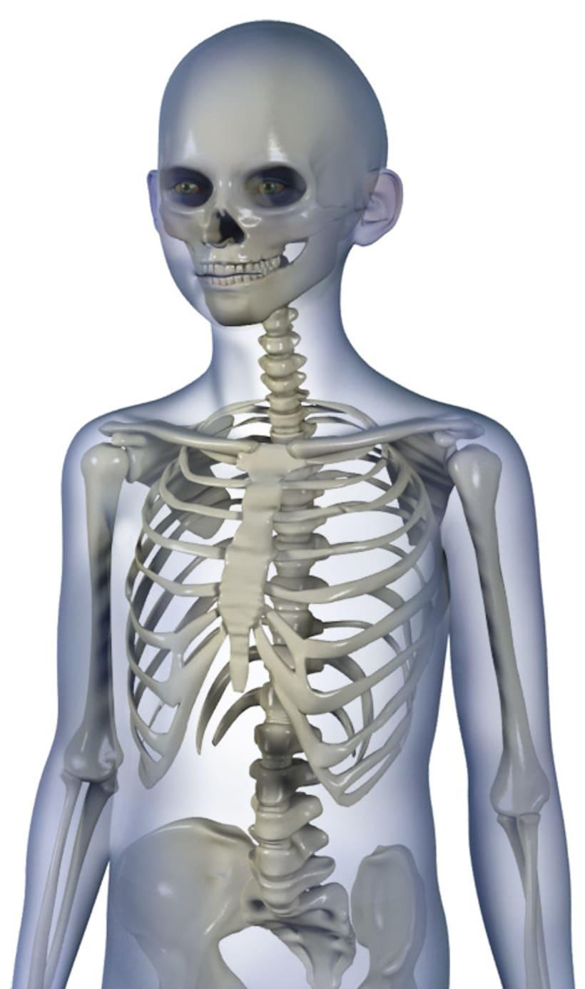 Enciclopedia Anatomía 2