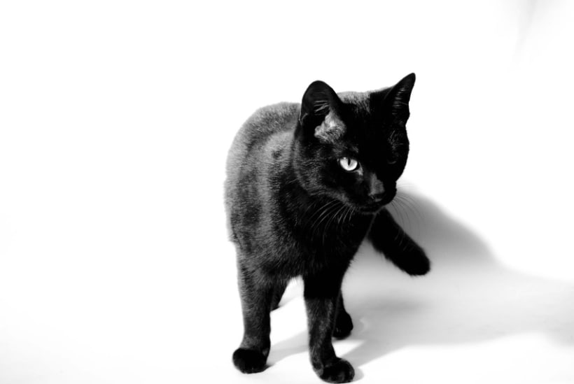 meow 1