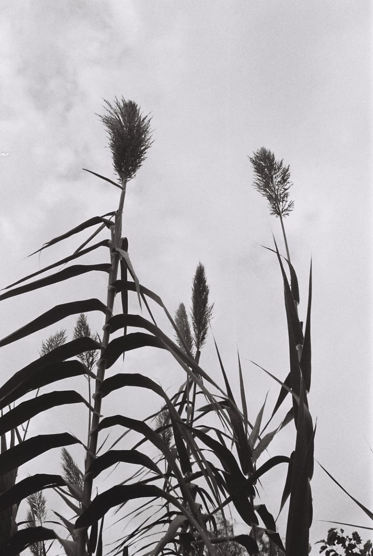 Película Blanco y Negro 4