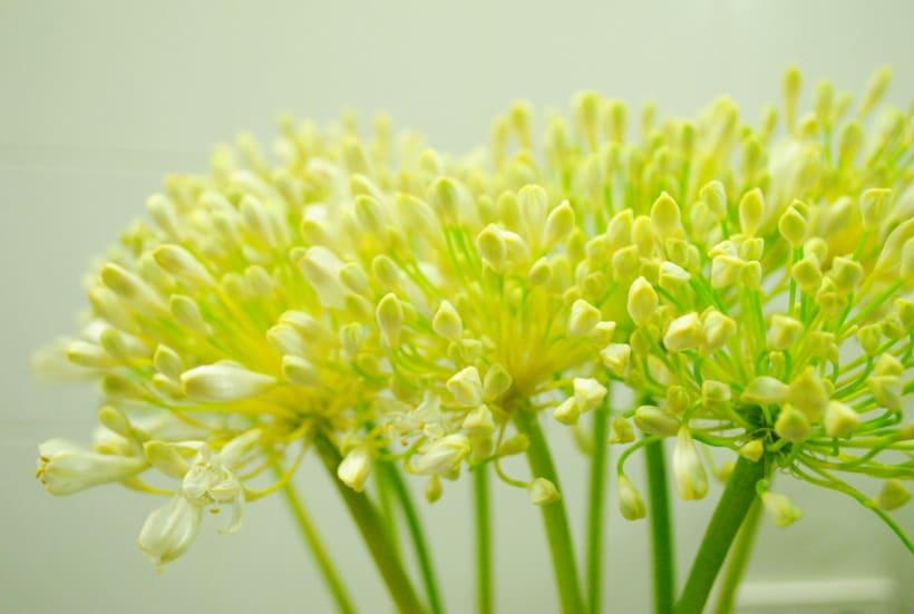 Fotografía floral y decoración 3