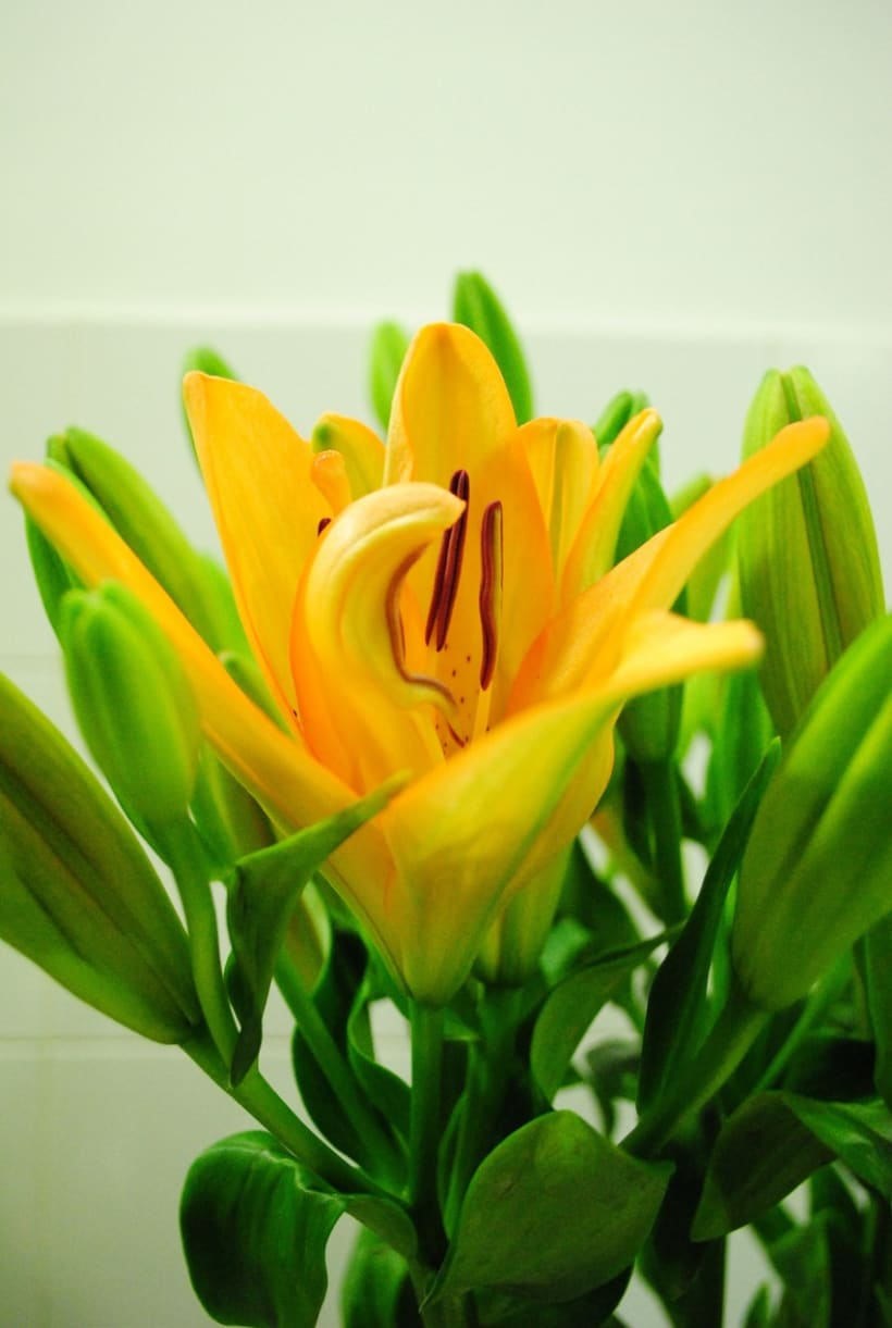 Fotografía floral y decoración 5