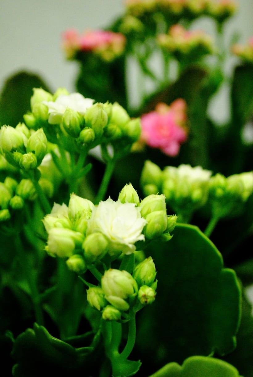 Fotografía floral y decoración 1