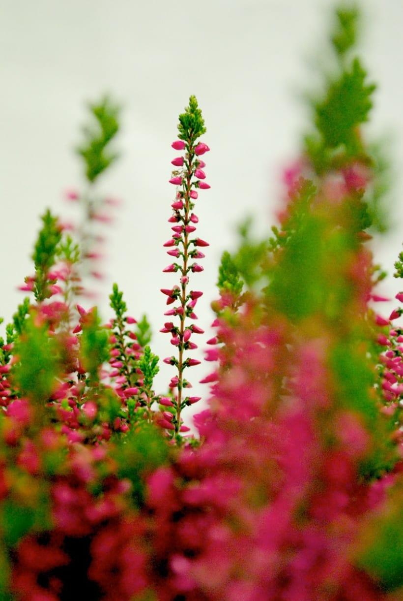Fotografía floral y decoración 2