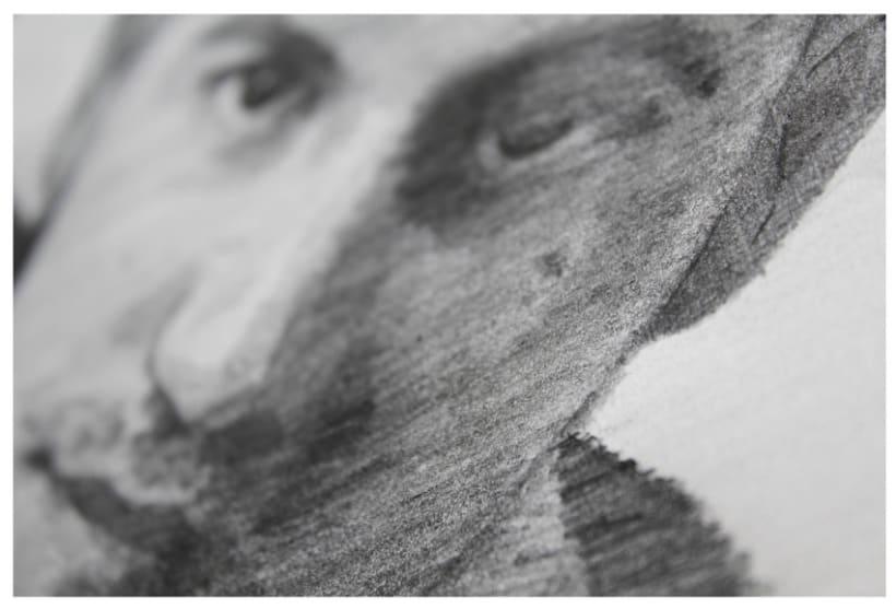 Proyecto participativo. 2013 40