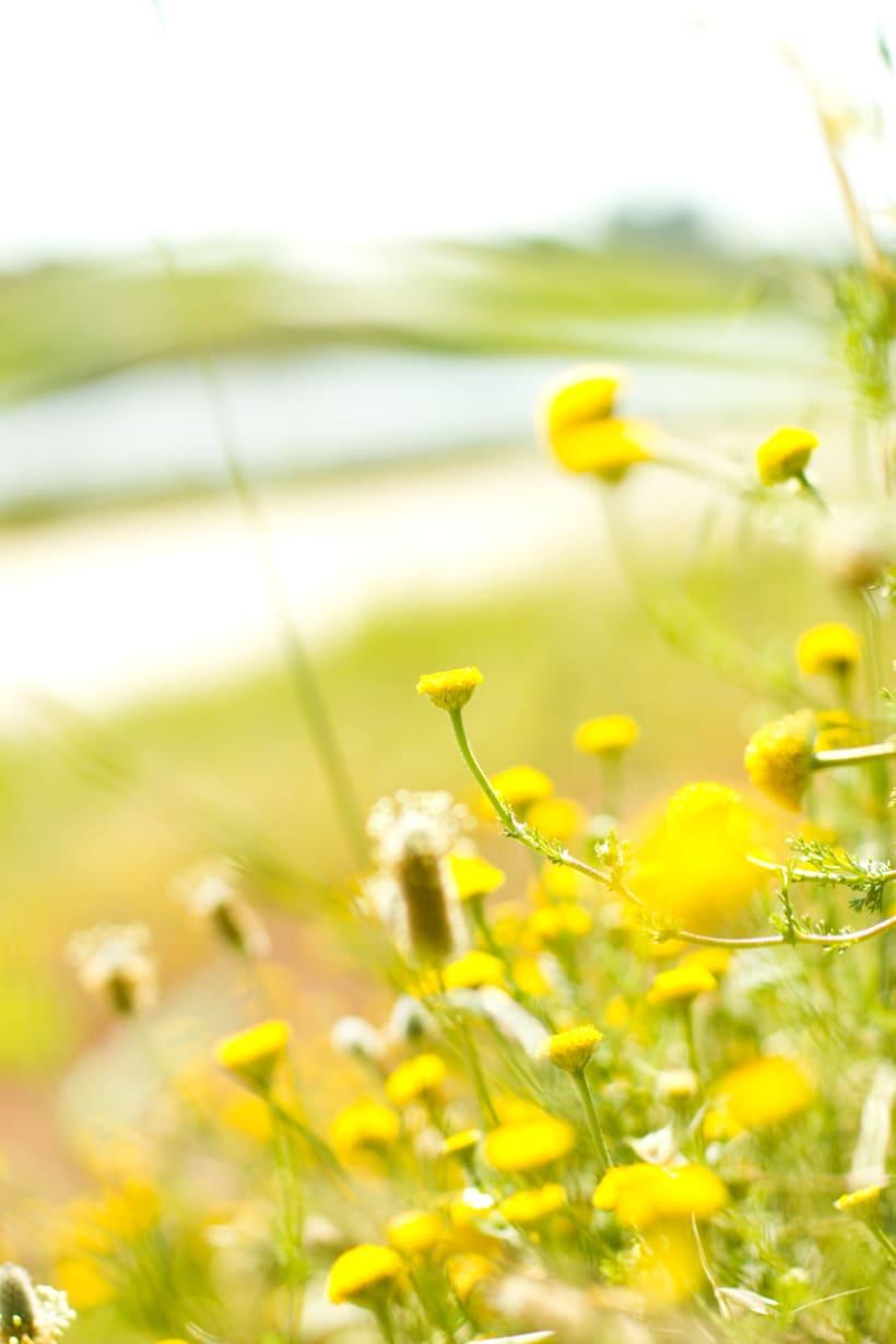 Amapolas y otras flores 4