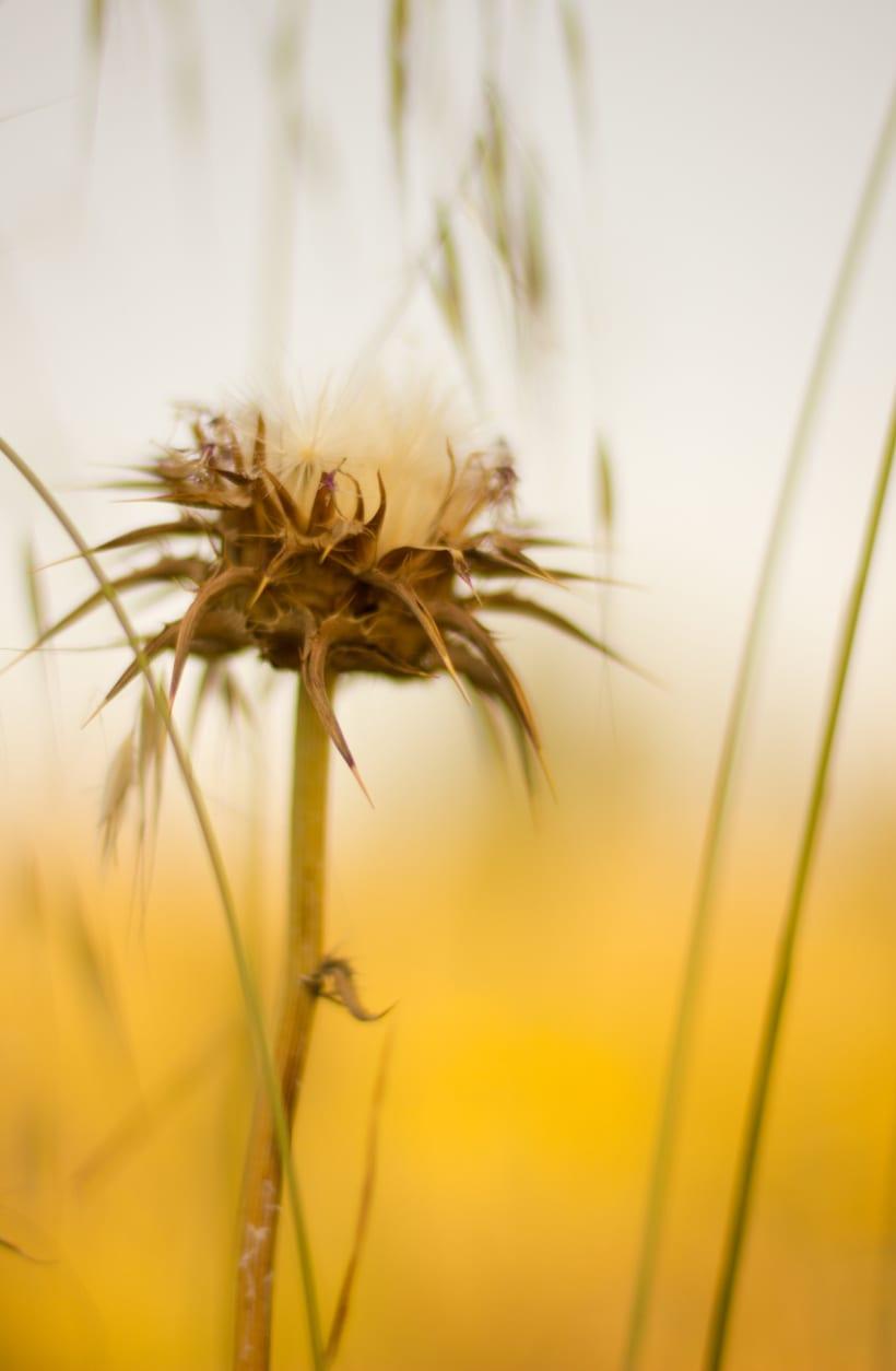 Amapolas y otras flores 3