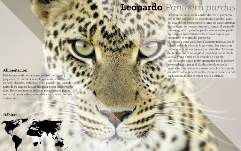 Animalia (world wild zoo) 1