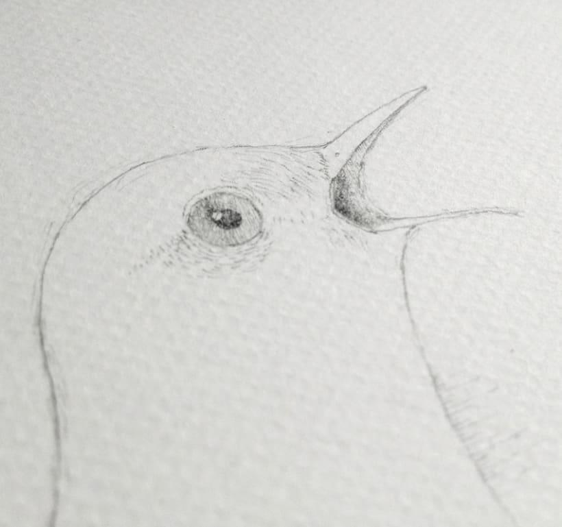 Ilustraciones a lápiz (1º Fase) 2