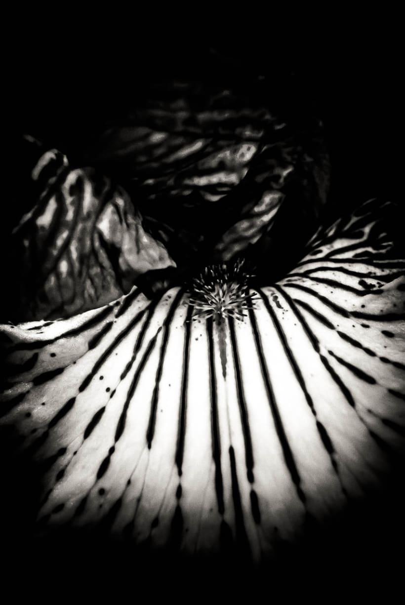 Formas de la Oscuridad 2