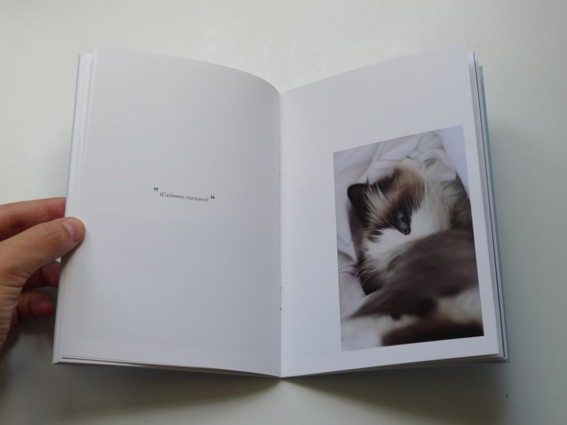 Miau 12