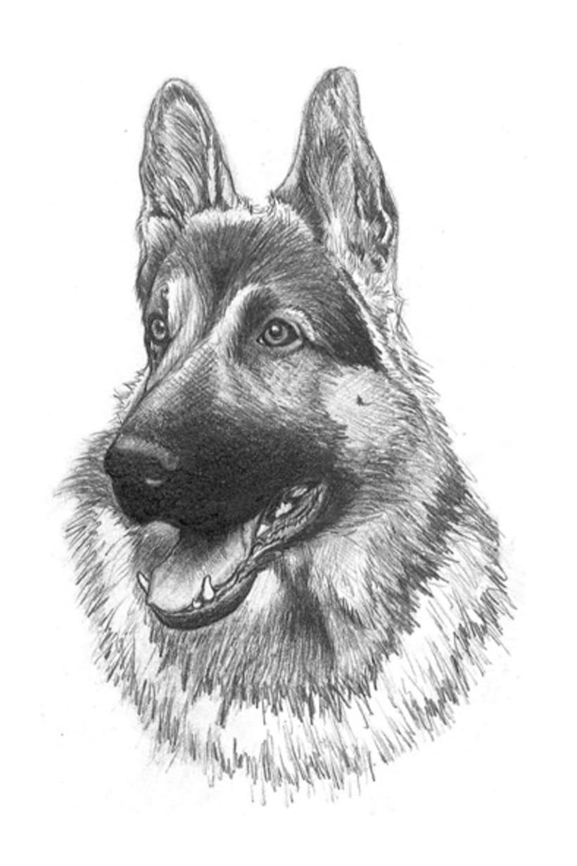 Ilustración animal 29
