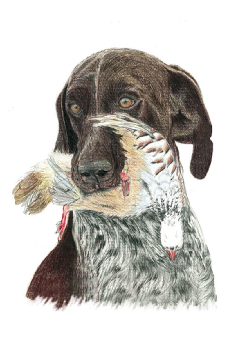 Ilustración animal 28