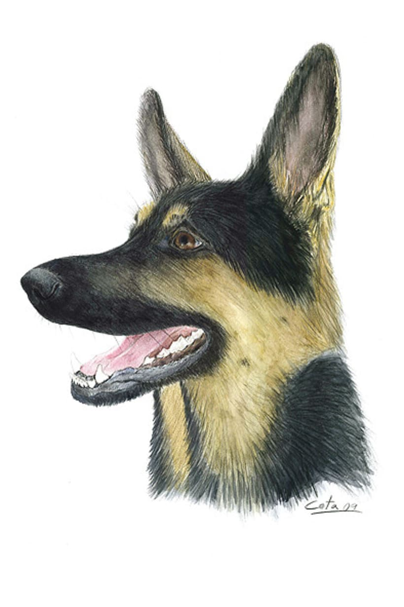Ilustración animal 15