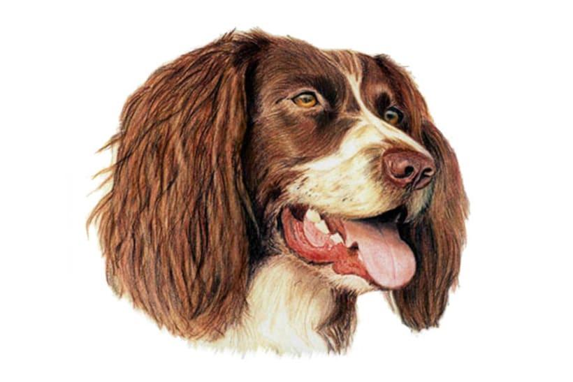 Ilustración animal 9