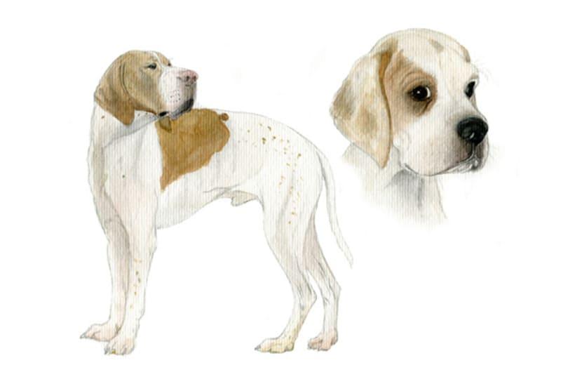 Ilustración animal 5
