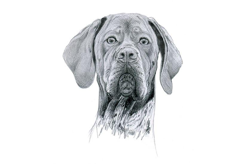 Ilustración animal 3