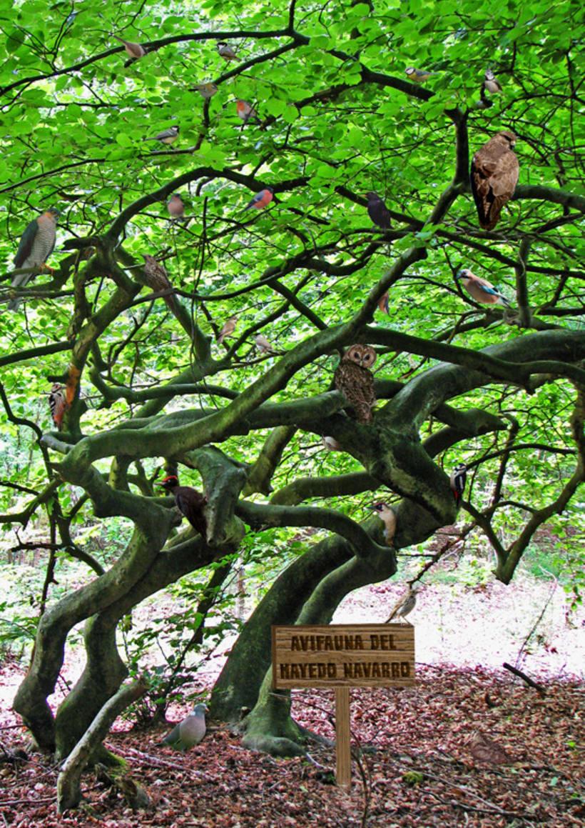 Avifauna ibérica - montaje fotográfico 24