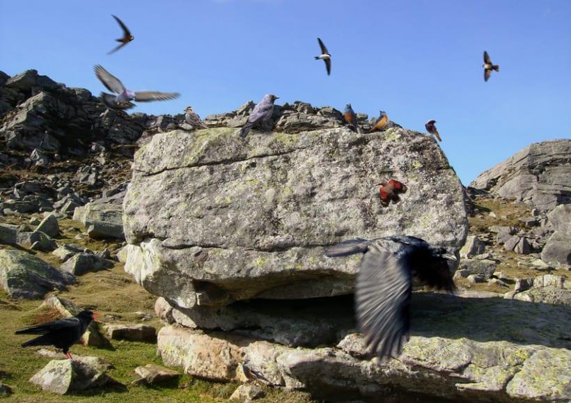 Avifauna ibérica - montaje fotográfico 14