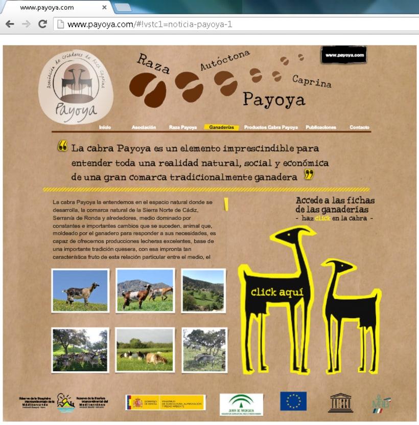 Payoya (Asociación de Criadores de Raza Caprina Payoya) 11