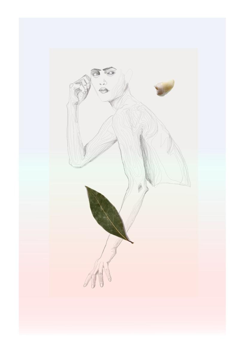 Ilustraciones.  1