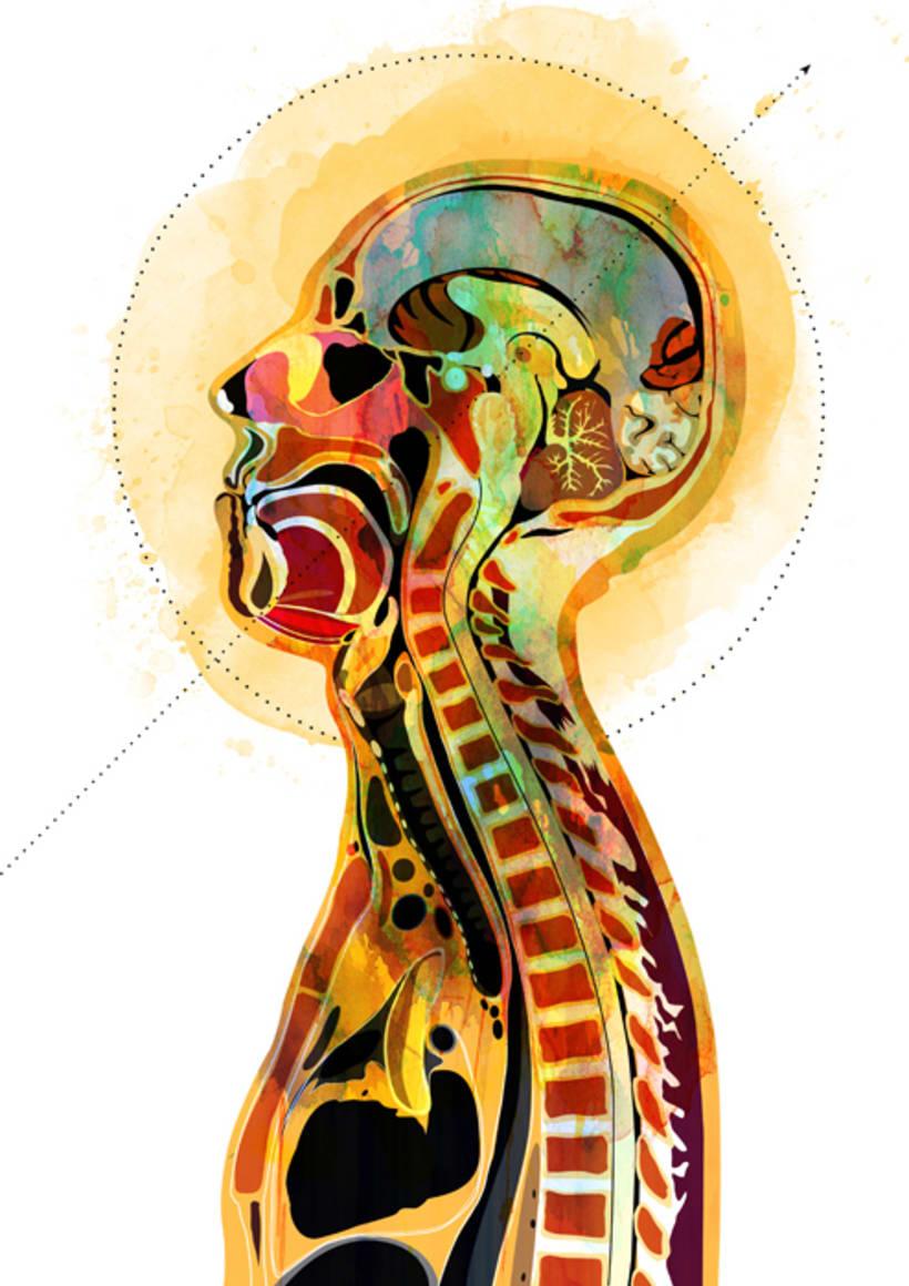 Anatomía 3