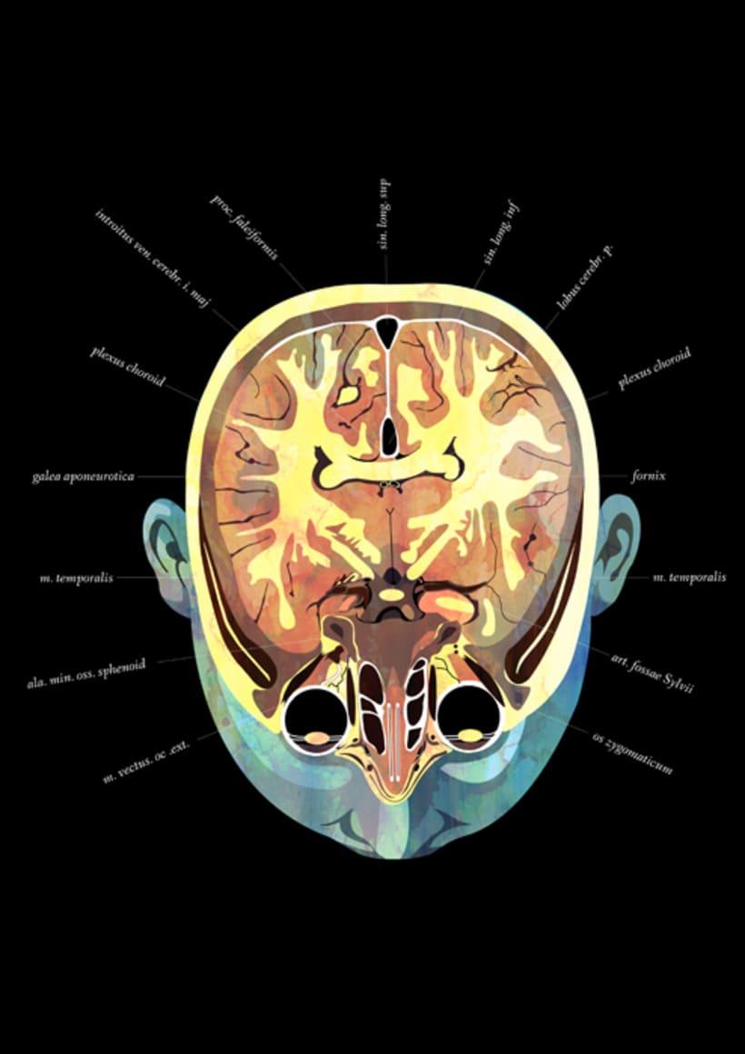 Anatomía 4