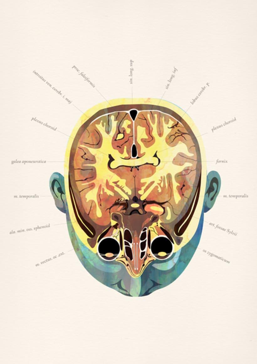 Anatomía 5