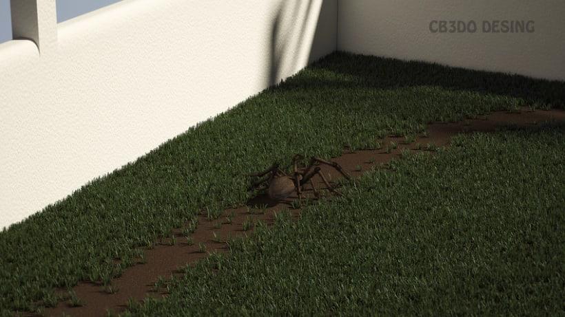 Animación Araña 1
