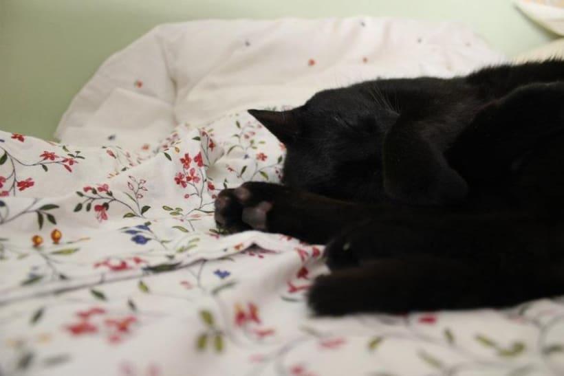 cat love -1