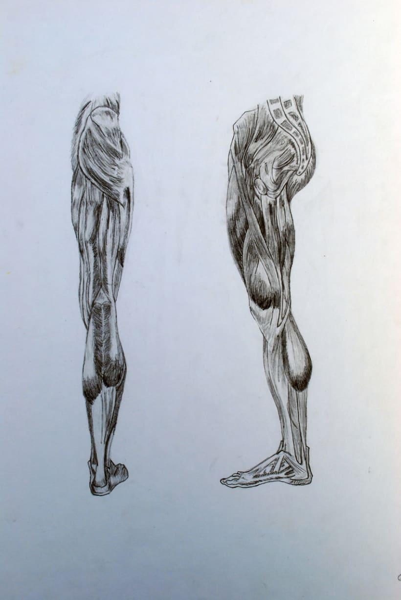 Anatomia 0