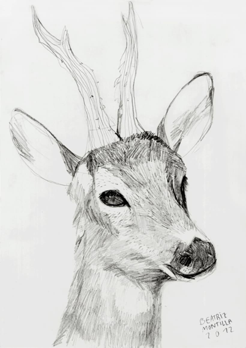 animales 8