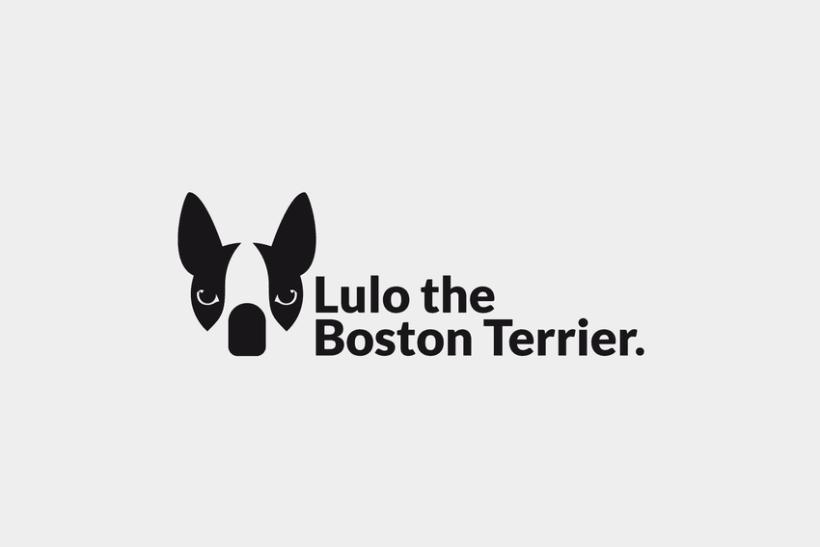 Lulo The Boston Terrier 0