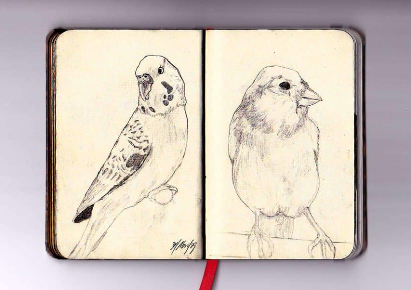Ilustración a lápiz 6