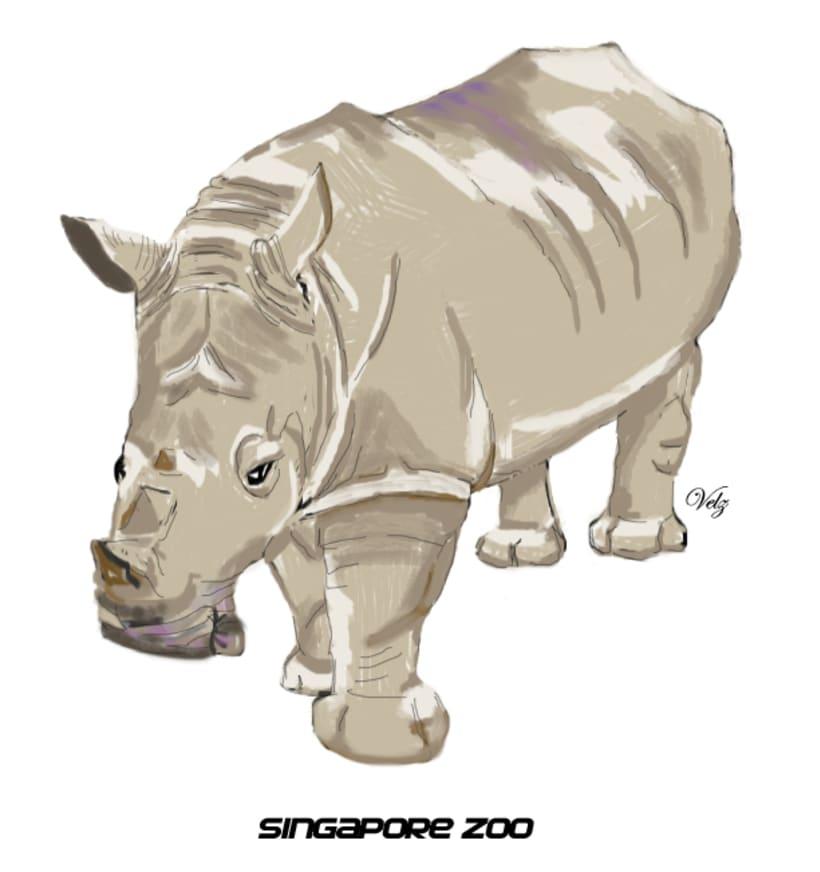 Rinoceronte Blanco -1