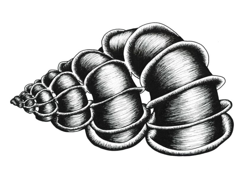 Illustrations: Bones and seashells 2