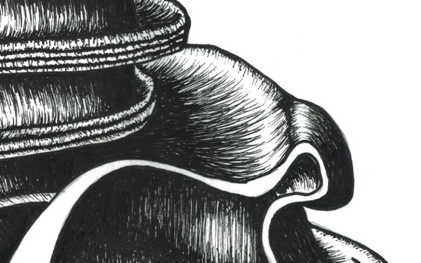 Illustrations: Bones and seashells 4