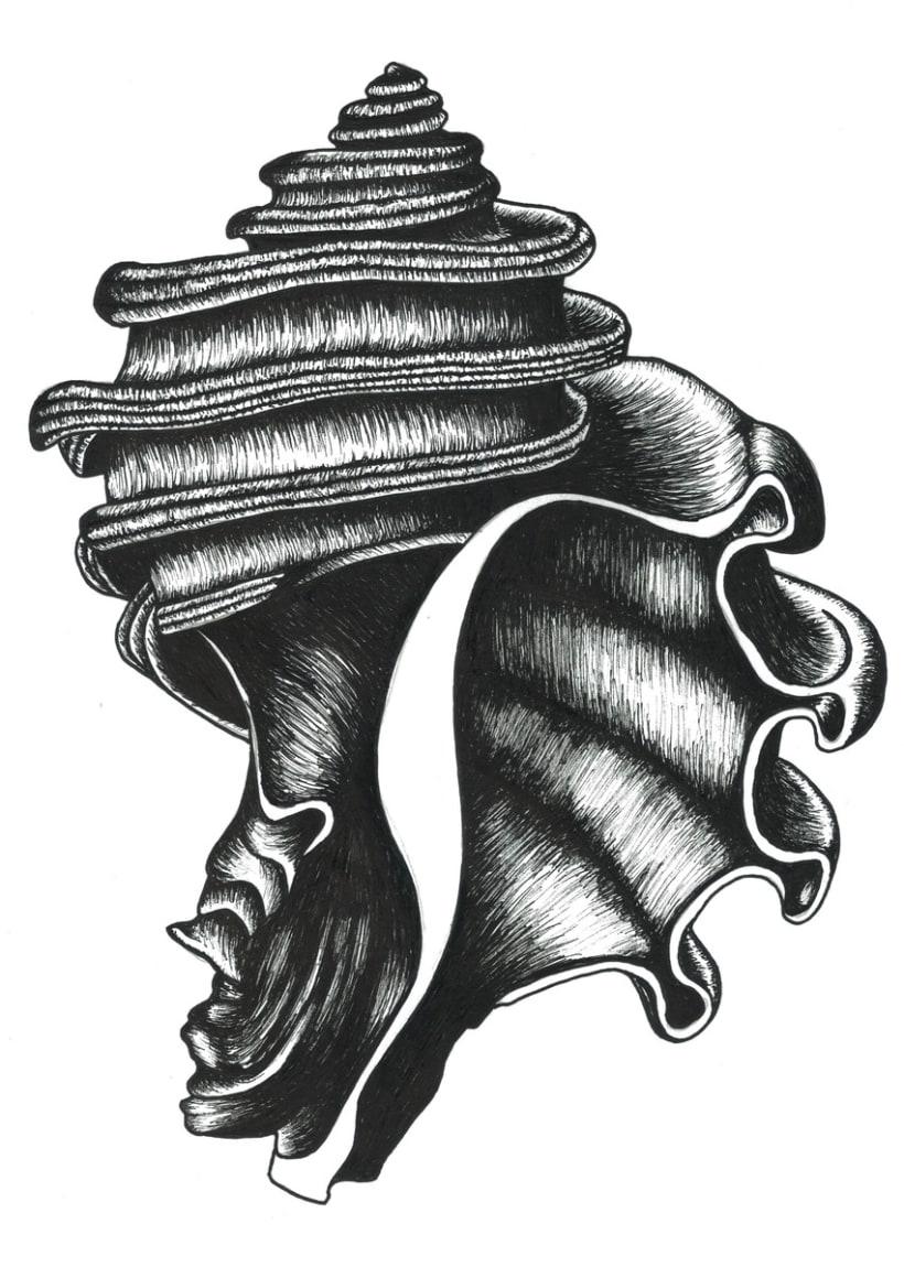 Illustrations: Bones and seashells 5