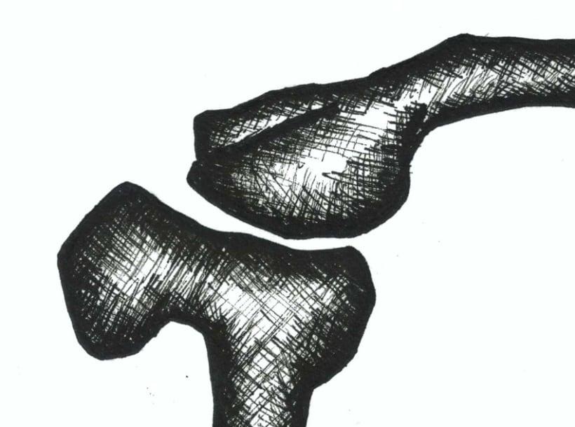 Illustrations: Bones and seashells 6