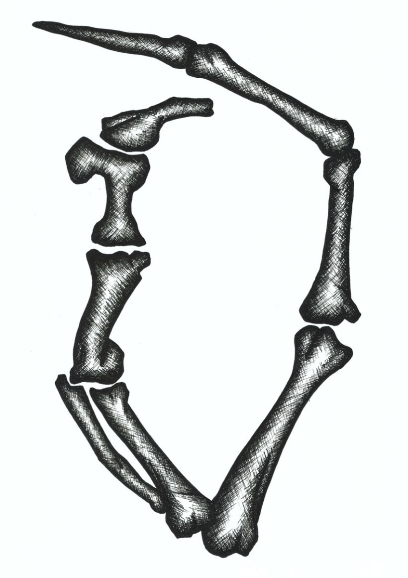 Illustrations: Bones and seashells 8