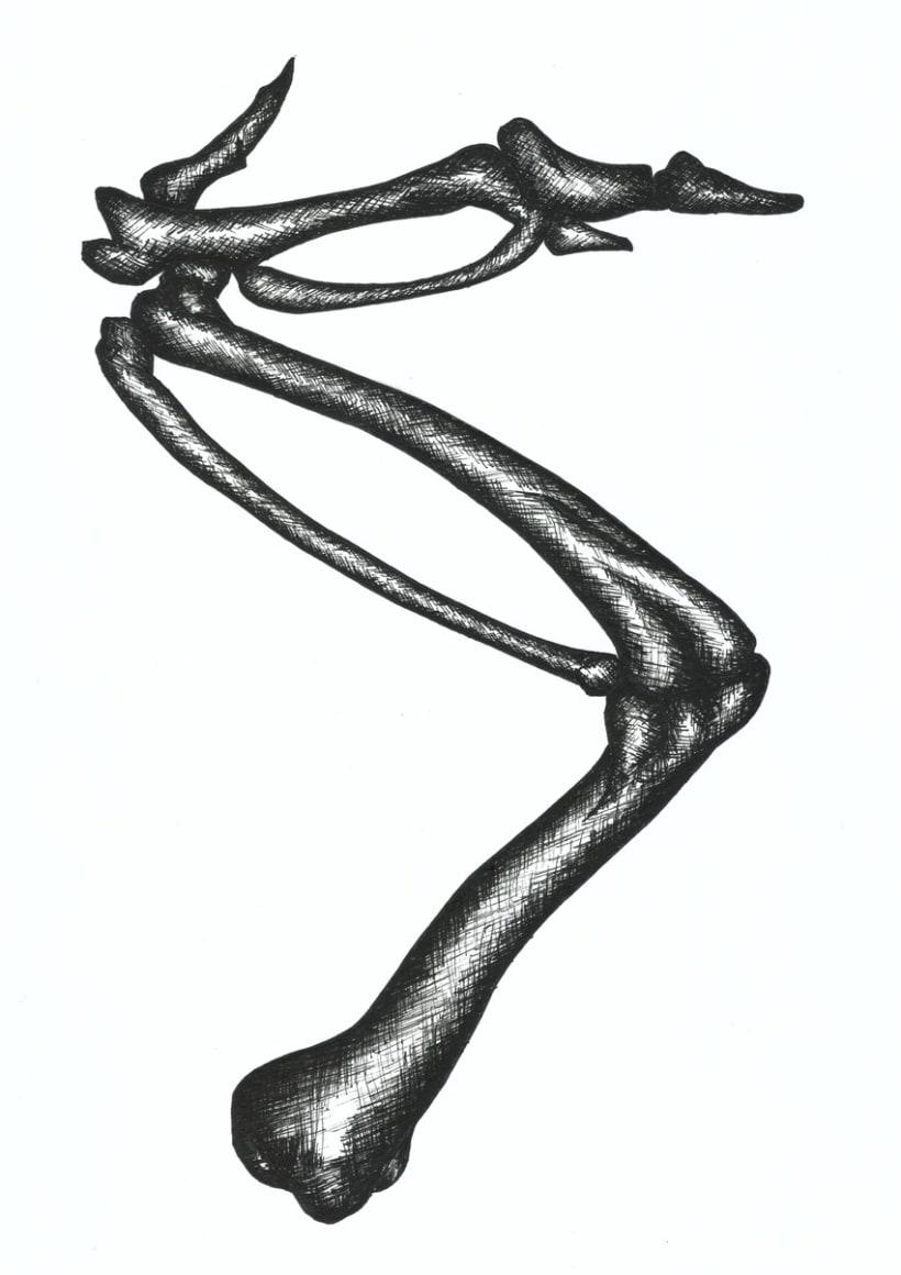 Illustrations: Bones and seashells 11