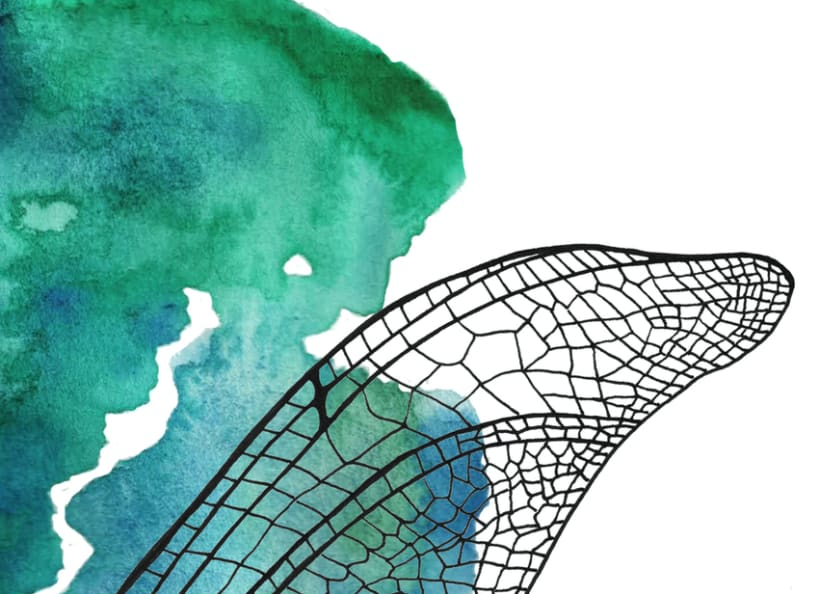 Illustrations: Watercolor with little parts of insects 6