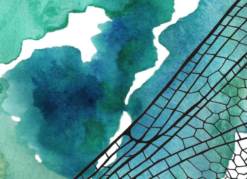 Illustrations: Watercolor with little parts of insects 7
