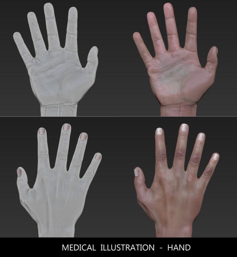 3D HAND _ Medical illustration to walking dead XD 4