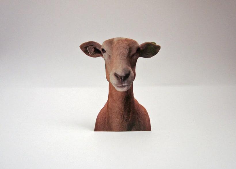 Sheep 2D 4