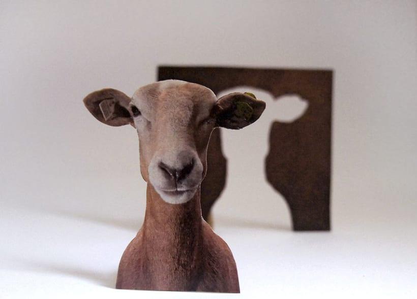Sheep 2D 5