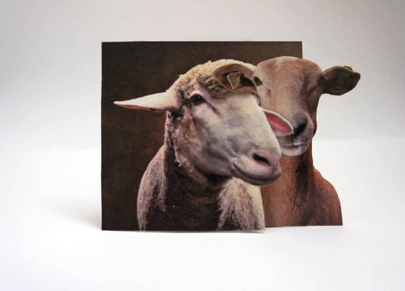 Sheep 2D 7