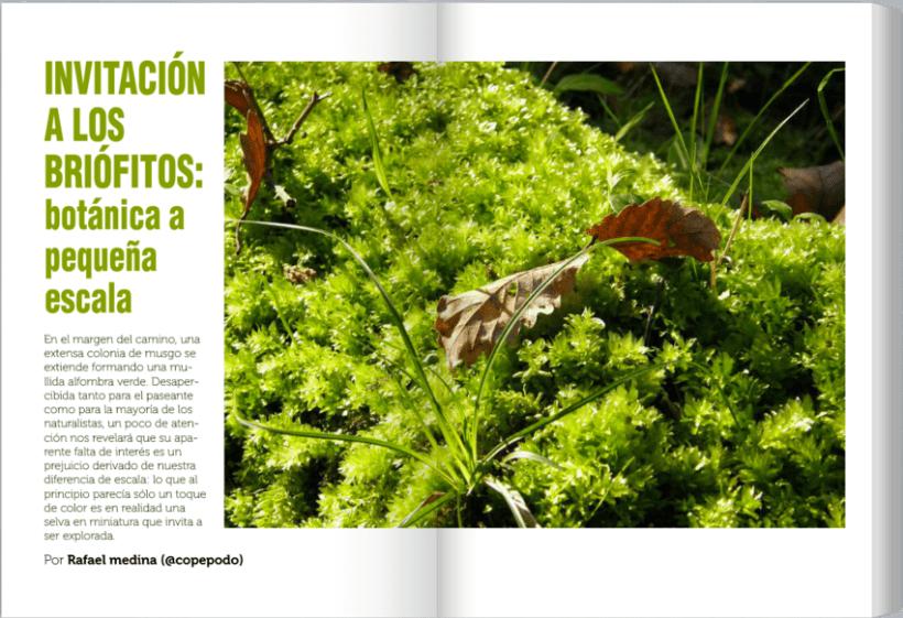 JoF magazine: Diseño editorial 3