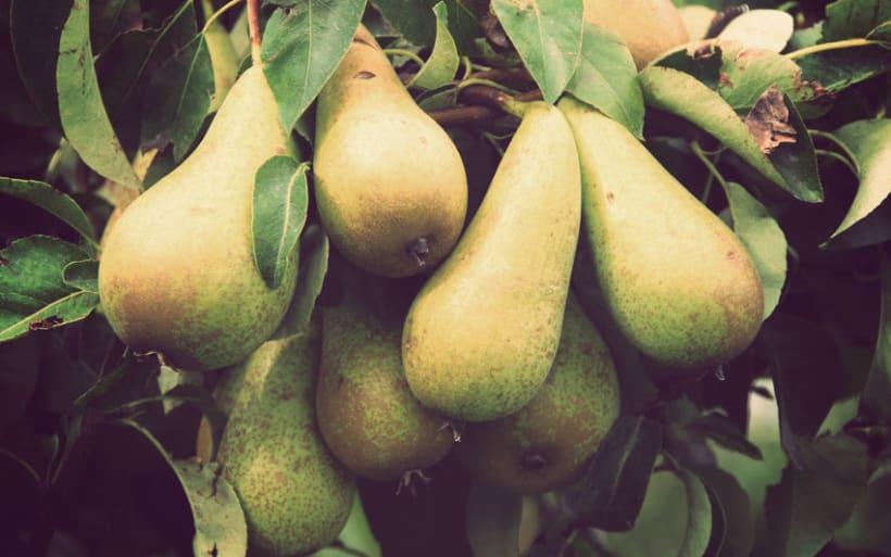 Conservas Fruita Blanch 5