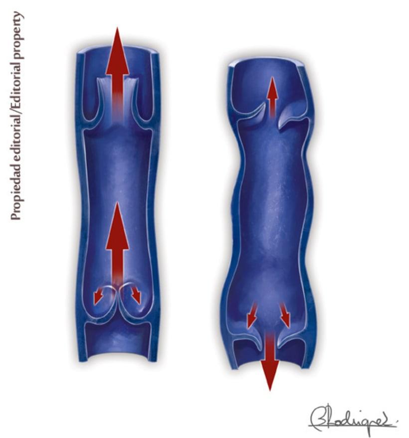 anatomia clínica 4