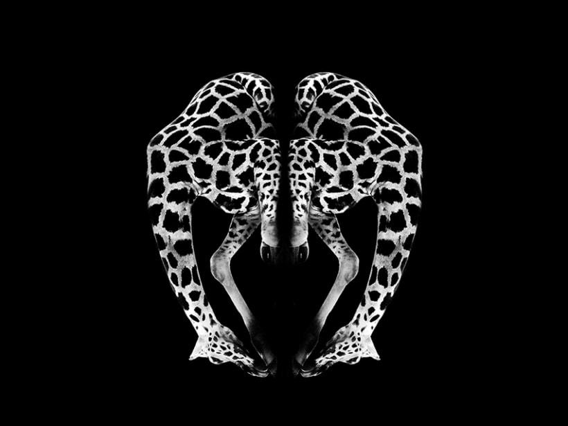 Metamorfosis Animal 2